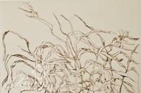 """Colette Portal """"Foliage with Insects""""  Etching, Signed and Numbered  22/30, 1976"""