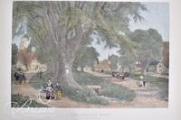 """""""Village Elms""""  J. Duthie, A/P Bellows Villon Print"""