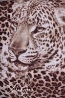 (4) Scarves with Animal Print Design and More