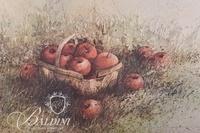 """Hubert Shuptrine (b. 1936 - 2006) """"Apple Plenty"""" 1970 Framed Print"""