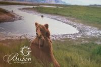 """Tom Mangelsen """"Bear River"""" Framed Photo"""