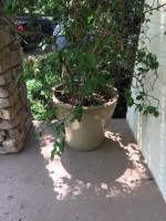 (5) Ceramic & Terracotta Planters