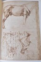 """""""Drawings of Michelangelo"""""""